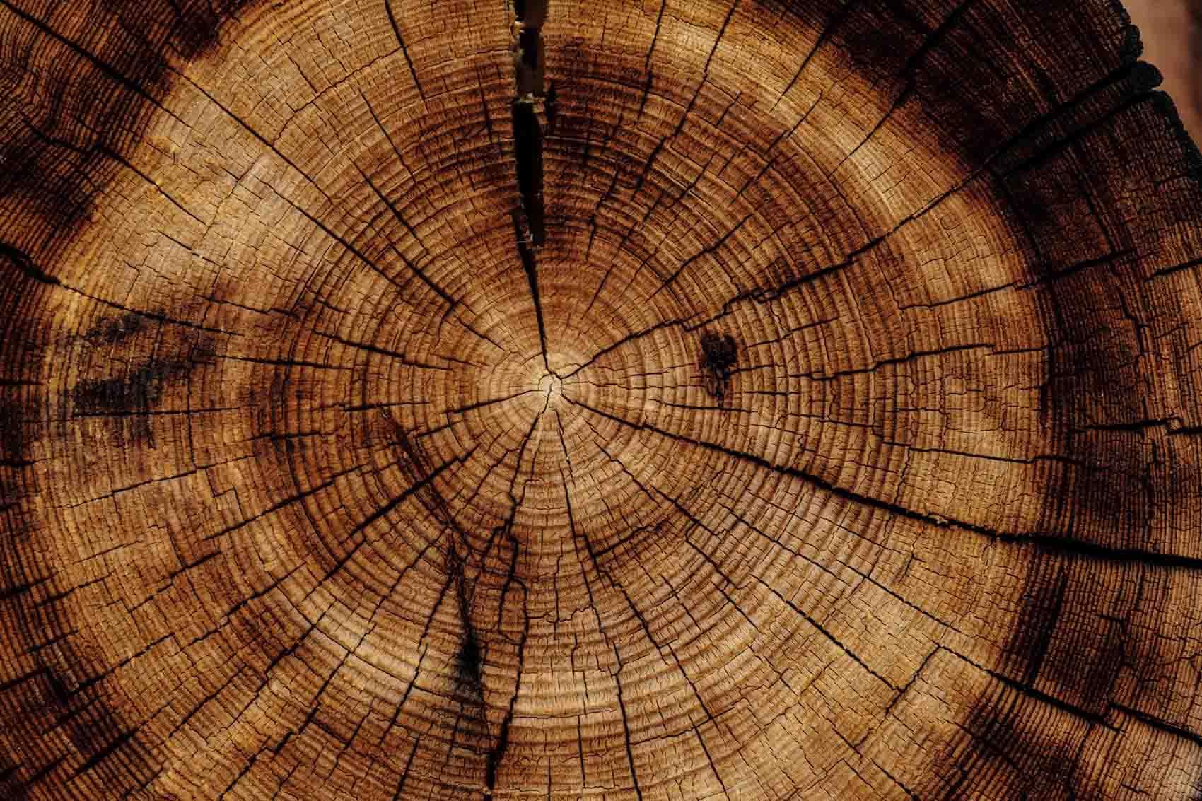 living-edge-tasmanian-timber-wood-grain-reclaimed