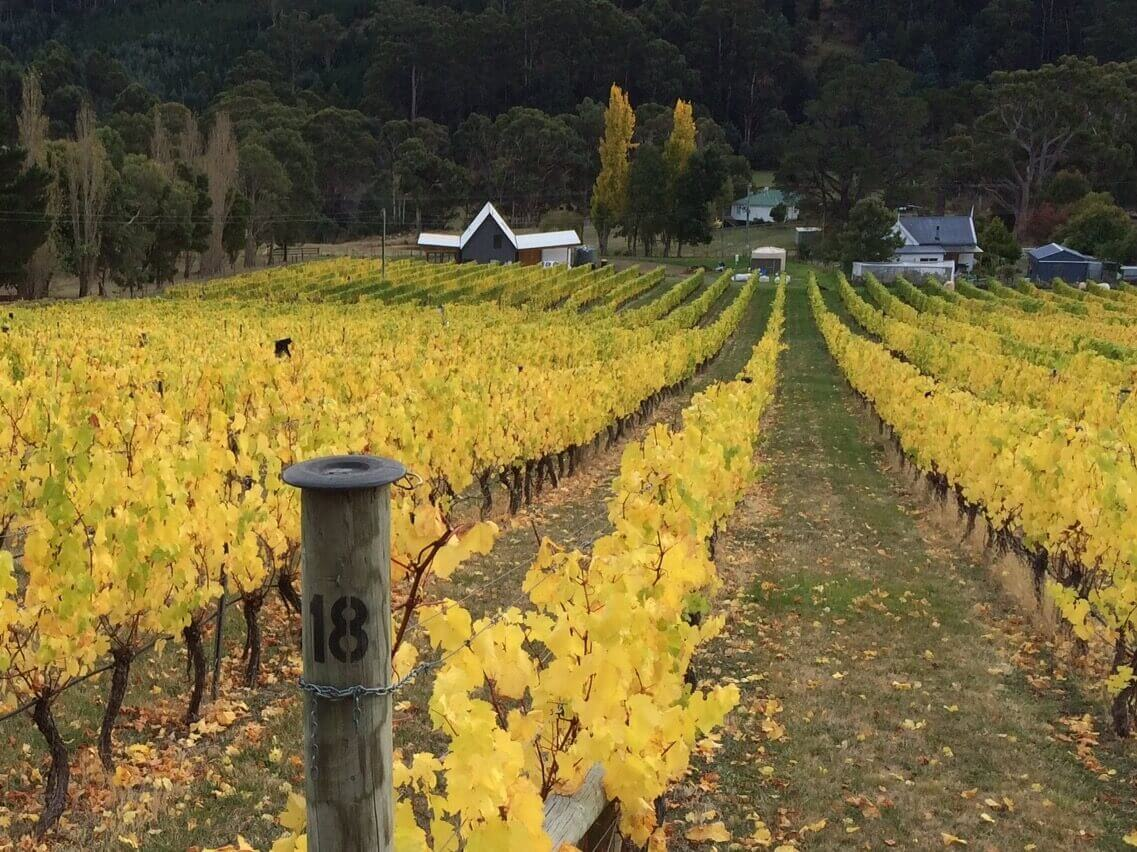 tasmanian-cool-climate-wine-two-bud-spur-vineyard-huon-valley-winery