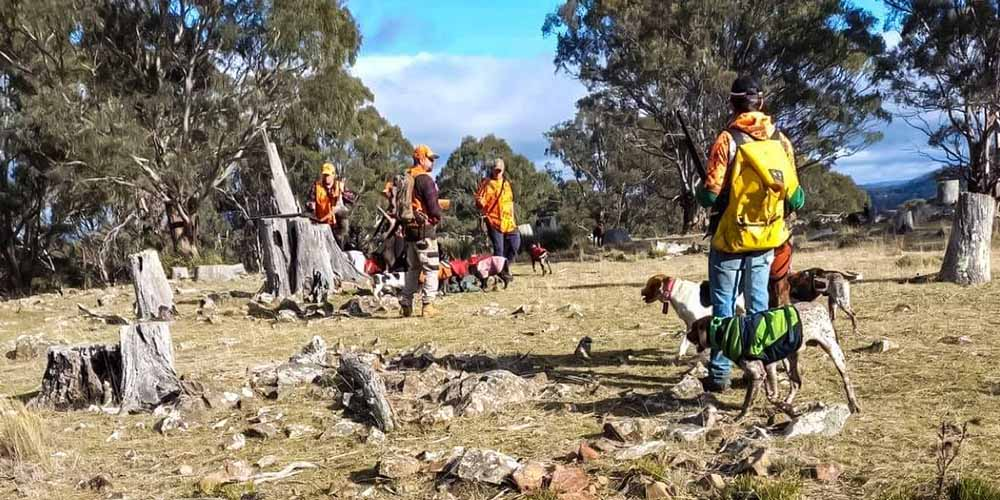 all-about-doggz-hobart-tasmania-